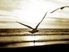 bird-at-beach.jpg