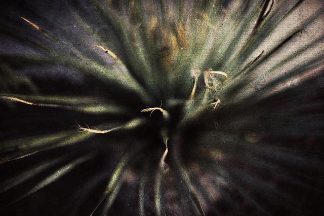nikkor-50-plant