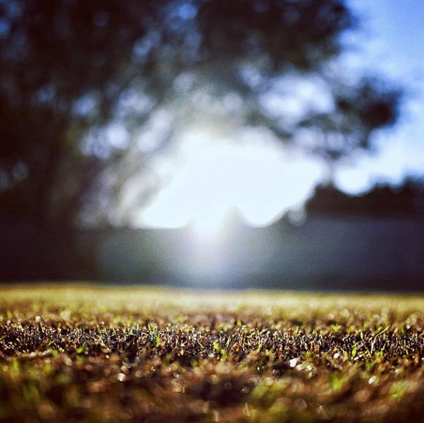 D750 grass